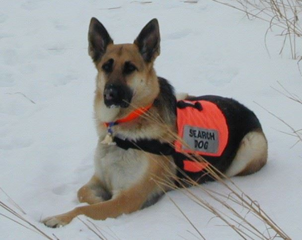 Search Dog Heidi
