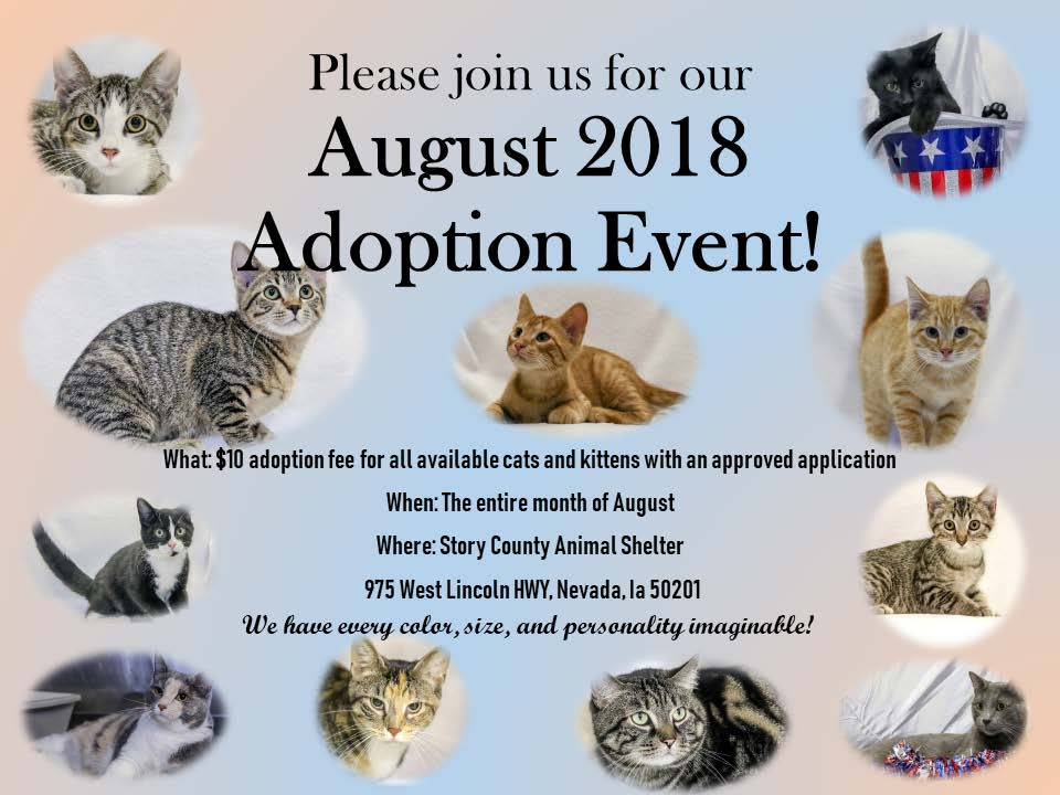 August Promo for Cat Adoptions